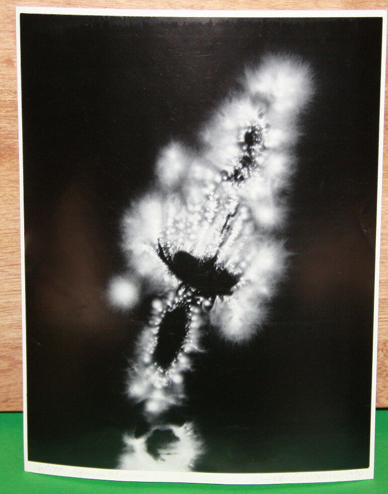 Vintage Original WALTER CHAPPELL Silver Photograph ELECTRON PHOTOGRAPH Signed