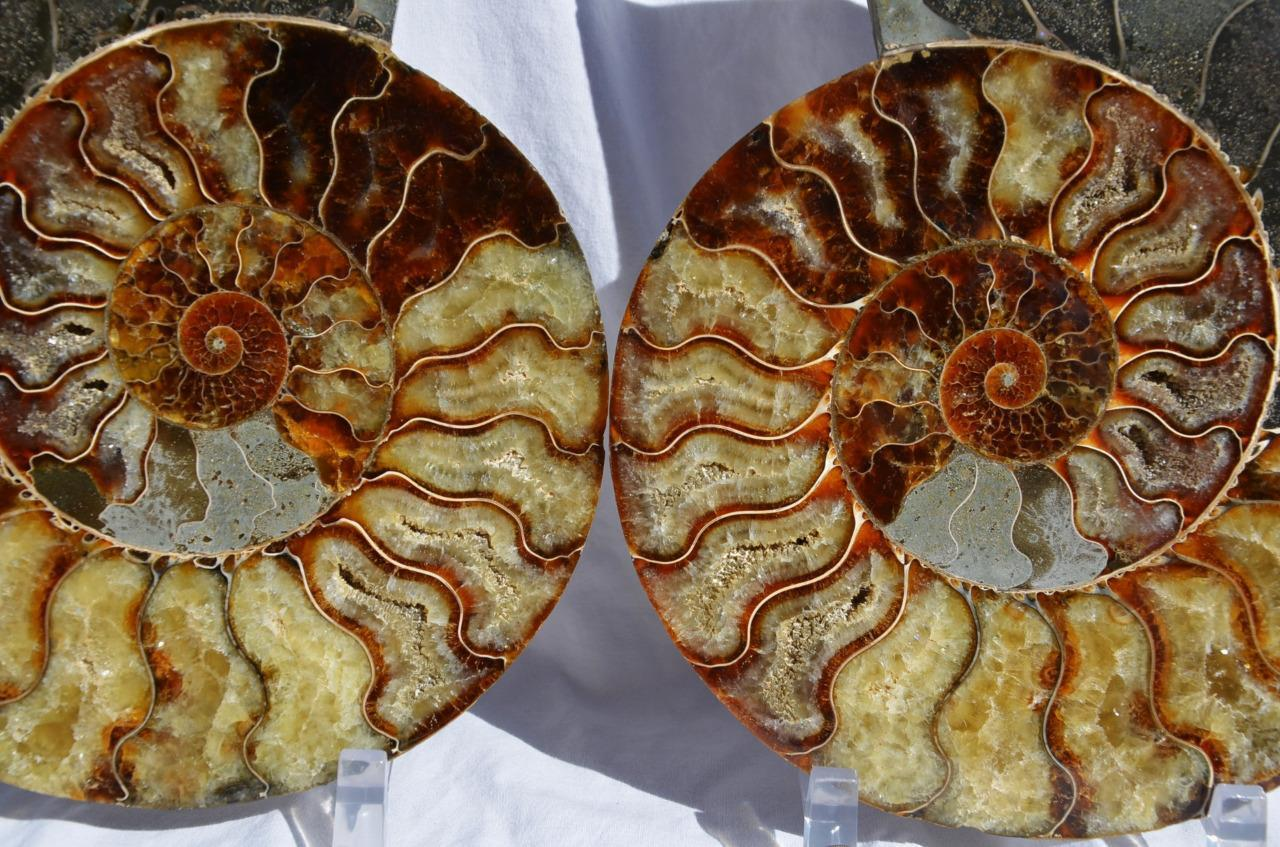1469x Cut Split PAIR Ammonite Deep Crystal Cavity 110myo Fossil 230mm XXXLG 9.0