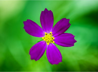 BTC NEW 1 OZ 24K  GOLD PLATED BTC BITCOIN COMMEMORATIVE COIN COLLECTIBLE P&T