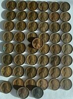 $$$$ 1909 VDB LINCOLN WHEAT CENTS  51  PENNIES ROLL  FUTURE