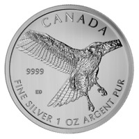CANADIAN SILVER 1 OZ RED TAILED HAWK 2015   BIRDS OF PREY SERIES