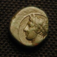 13 SICILY PANORMOS APOLLO RV FOREPART HORSE DOLPHIN 13MM 2.17 GRAMS 4TH CENT BC