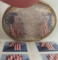 GOLD RIM 1882 O MORGAN DOLLAR DMPL  UNBELIEVABLE EYE APPEAL  UNREAL MIRRORS