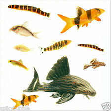 TROPICAL AQUARIUM FISH FOOD PLECO BOTTOM FEEDING CATFISH PLEC VACUUM PACKED
