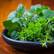 Basil, Sage, Mint Fragrance Oil for Candle & Soap Making - Free Shipping