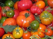 Heirloom Tomatoe16 Kinds+ buy 2 get 1 free till Christmas only+ Combined S&H