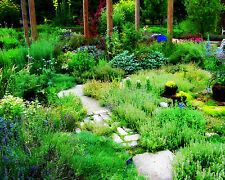 Herb Seeds Complete selection of assorted varieties SALE collection  organic