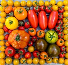 Tomato Seeds Selection Complete List Collection zellajake varieties beefsteak