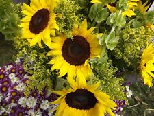 Grey stripe sunflower ( 100, 200 ==== 5 LB seeds) bulk birds annual flower