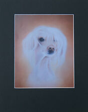 Dog Mounted Print *CHINESE CRESTED * by UK Artist *