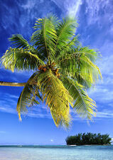 Art print POSTER Coconut Palm