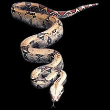 Python Snake 3D Look T-Shirt All Sizes And Colors