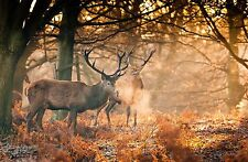 Deers In Autumn Forest  Landscape - Animal Wall Art Various Size Canvas Prints