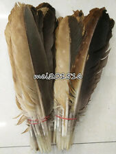 Free shipping 10-200pcs rare 12-14 inch /30-35 cm natural pheasant feather new