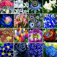 new multi color Flower Seed Ideal Heirloom Potted Plant home garden Ornamental