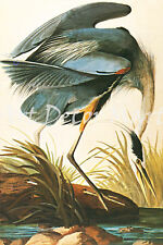 Great Blue Heron-Audubon - - CANVAS OR PRINT WALL ART