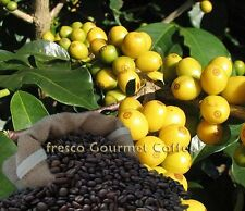 Yellow Bourbon Coffee Beans 100% Arabica Bean or Ground Coffee World Coffee