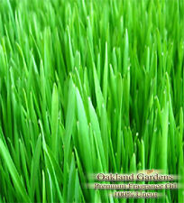 FRESH CUT GRASS Fragrance Oil - Scent of freshly clean mowed grass in the air...