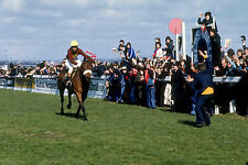 RED RUM 1977 GRAND NATIONAL WINNER OF THREE GRAND NATIONALS 01 PHOTO PRINT 01A