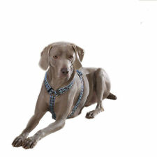 Guardian Gear Hibiscus Flower Dog Harness - Beachside Blue Choice of Sizes NEW