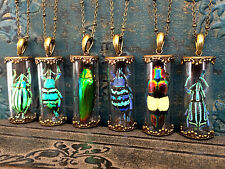 Real Beetle necklace Insect jewelry Terrarium pendant Weevil Jewel bug taxidermy