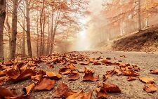 Autumn Leaves Road Forest Trees landscape Wall Art Various Size Canvas Prints