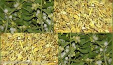 Dried Mistletoe Witch Spells Wicca Incense Pagan Love Spell Valentines