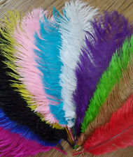 Wholesale Natural OSTRICH FEATHERS 12-14'inch 11 kinds Color Selection
