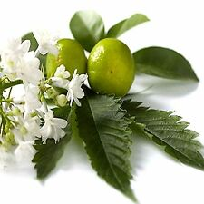 Patchouli Fragrance Oil Candle/Soap Making, Oil Burners, Diffusers