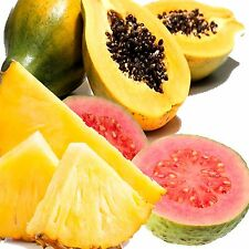 PINEAPPLE GUAVA & PAPAYA Candle/Soap Making Fragrance Oil,Oil Burners,Diffusers