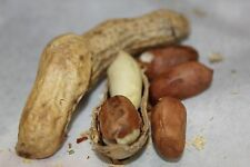 FRESH ROASTED ** SALTED** PEANUTS IN THE SHELL  2 pounds
