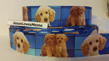 Grosgrain Ribbon, Goldendoodle Labradoodle Standard Poodle Doggies Puppies, 7/8""