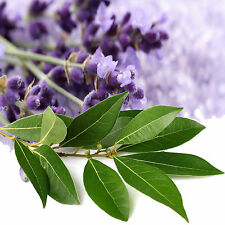 EUCALYPTUS & LAVENDER Room/Linen/Car Air Freshener Spray EXTRA STRONG