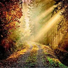 1 WALL PHOTO GIANT WALLPAPER JUNGLE FOREST PATH SUN BEAM POSTER MURAL 3.60x2.53m