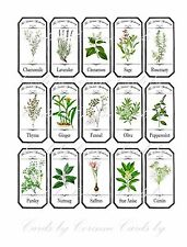 Herb spice labels choose from 30 glossy laminated adhesive cut and ready to use