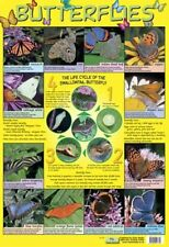 New Butterflies Life Cycle Mini Poster