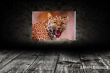 Leopard 102 CANVAS PRINT FRAMED or ROLLED choose size A2,A1,A0