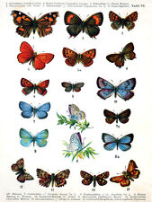 5978.Butterfly Nature POSTER.Interior design.Decoration Art.Decorators Paradise