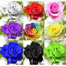 100+ Flower Seed Holland Rose Seed Lover Gift Orange Green Rainbow RARE 11 Color