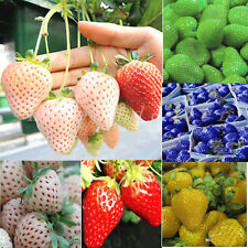 1Pack Rare Delicious Strawberry Seeds Vegetables Fruits Seeds New