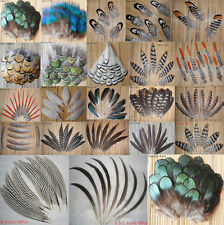 Wholesale all kinds of different beautiful natural pheasant feather-U01
