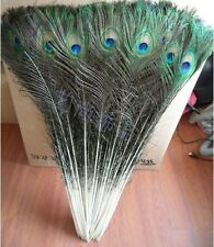 Wholesale ,50pcs-100PCS  Peacock Tail Feathers about 30-33 Inches