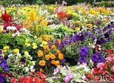 FLOWER SEEDS Wild Scented bee cottage garden border bedding plant mix seed