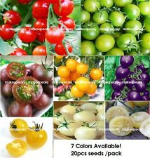 20 PCS Rare Tomato Seeds Cherry Heirloom Delicious Fruit Vegetables Seed