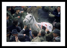 Desert Orchid 1999 Cheltenham Winners Enclosure Horse Racing Photo (101)