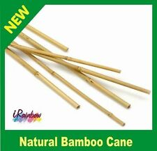 Natural Bamboo Cane - Multi Purpose, Plant Trellis, Climbers - Garden Stakes