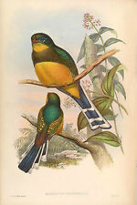 New Vintage John Gould Art Print or Poster #3 Repro Birds Giclee Archival Inks