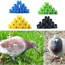 100pcs Colorful Bird Rings 10mm Leg Bands Pigeon Chicks Bantam Poultry
