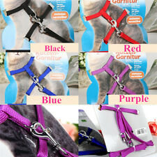 Pet Supplies Cat Supplies  Harnesses & Leashes Small Animal Leashes Dog Leashes