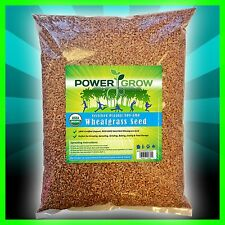 Wheat Grass / Cat Grass Seeds ~ Certified USDA Organic Amounts up to 50 LBS BULK